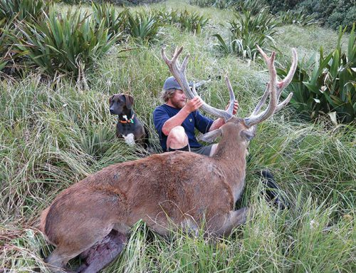 Trophy Evaluation with Tim Butcher, Red Stags